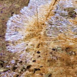 mycelium_on_pittmoss_large