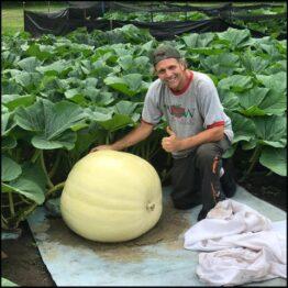 pumpkin_large