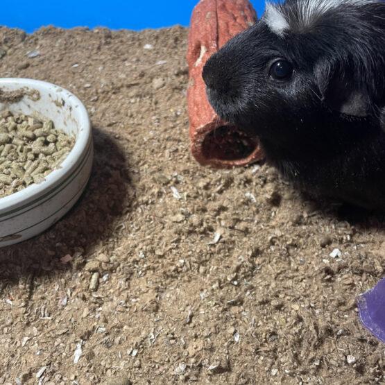 pittmoss-pet-bedding-result